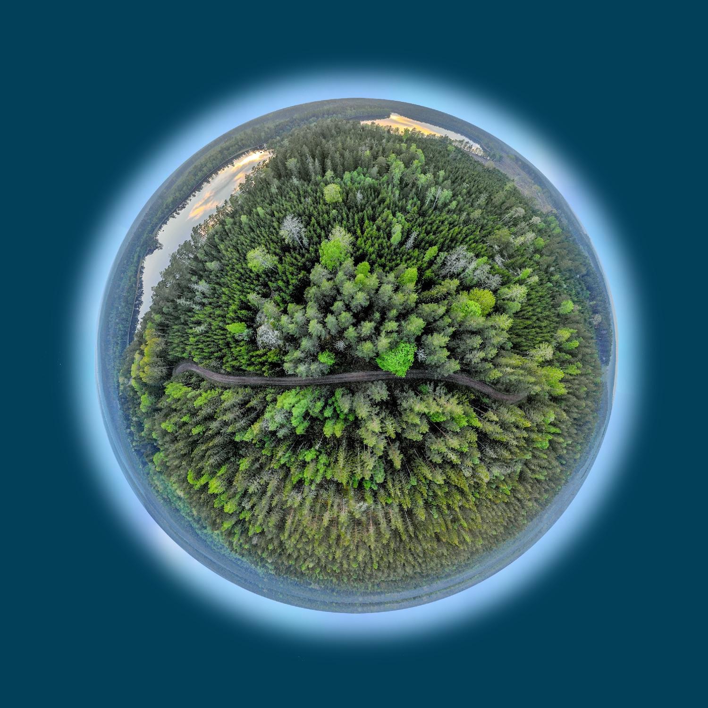 Spatial Business Integration hilft dem Wald